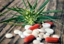 Certaines pharmacies désormais habilitées à délivrer du cannabis thérapeutique