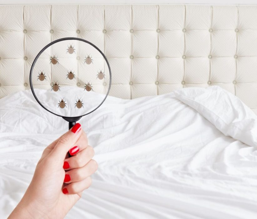 Punaises de lit : insecte ennemi public n°1