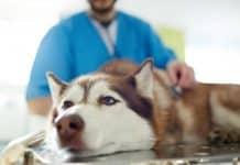 Trouvez un vétérinaire fiable pour votre animal de compagnie